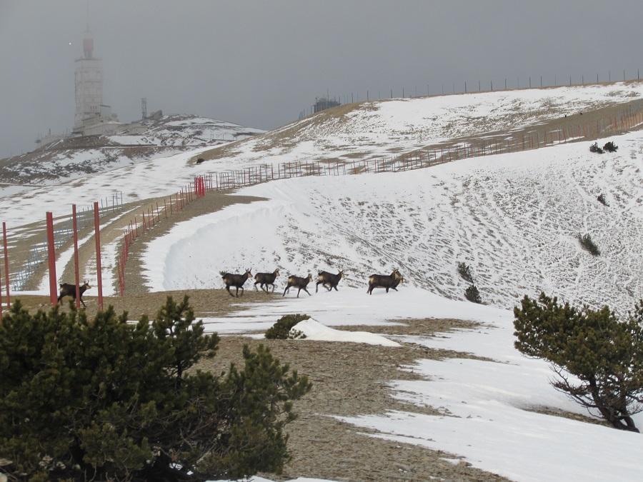 le mont ventoux 1912m par le chalet reynard sortie du 8 d 233 cembre 2015