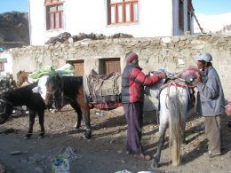 Namgyal et Jigmet chargent les chevaux