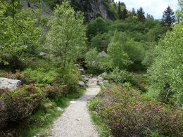 Sentier style «jardin alpin» entre les rhododendrons...