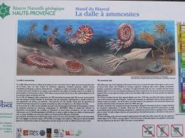 La dalle à Ammonites, explications