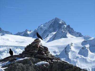 Le sommet et le Chardonnet.