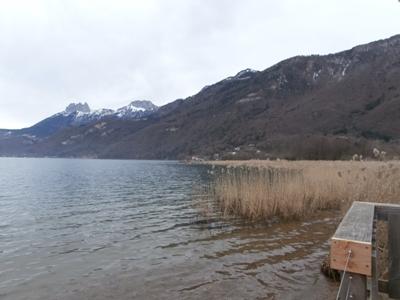 Le bout du lac d'Annecy et les roselières